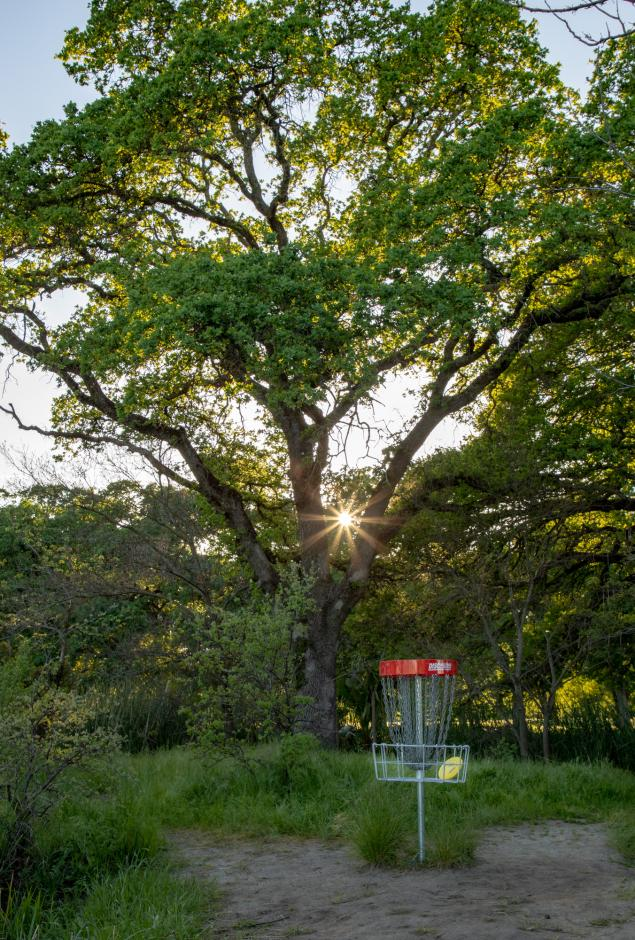 Disc golf basket and tree sunset photo
