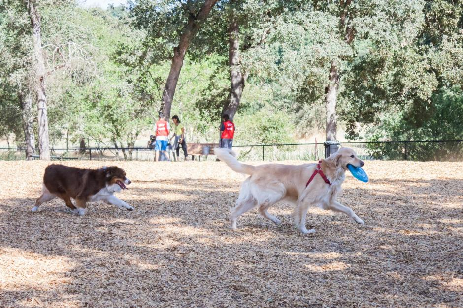 Two dogs play with a frisbee at the RRUFF Dog Park in Rocklin, California