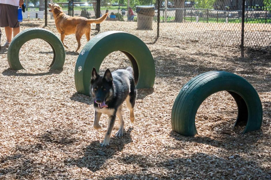 A dog plays by a tire agility course at the RRUFF Dog Park in Rocklin, California